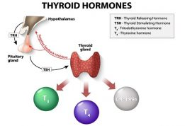 The Way A Lot Can You Make Thyroid Stimulating Hormone